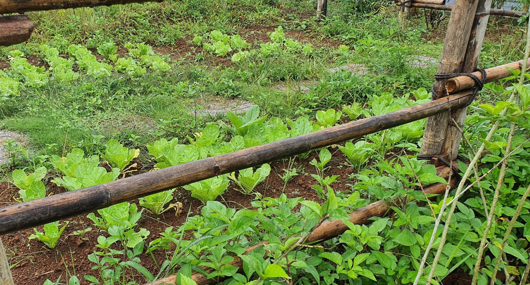 Vườn rau, nơi các trại sinh sẽ được trải nghiệm mỗi ngày